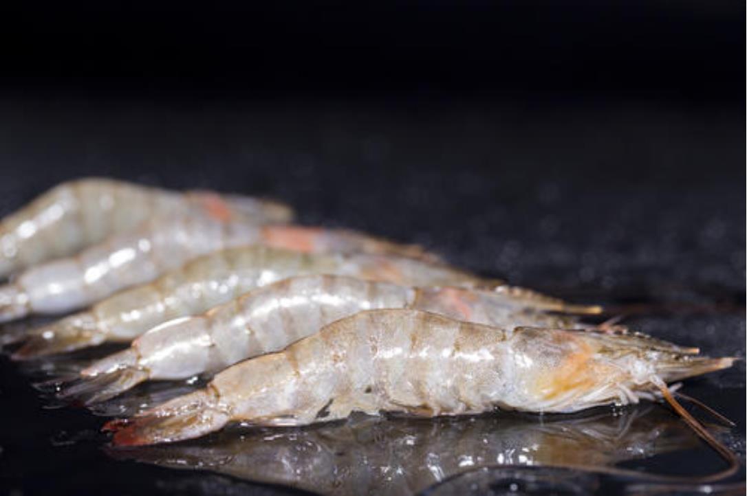 厄瓜多尔白虾